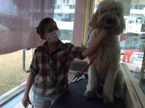 pet shops in Singapore Pets Republic owner