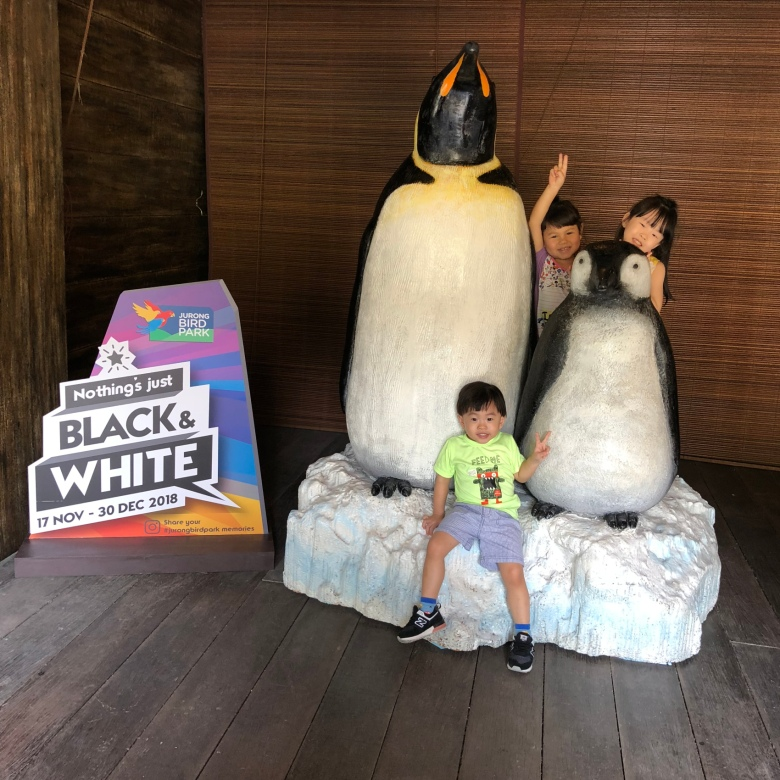 review bird tour for kids in Singapore