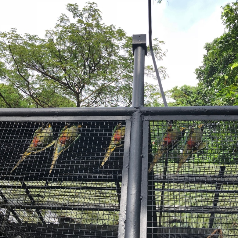 outdoor activities in Singapore bird park
